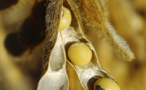 Lécithine de soja
