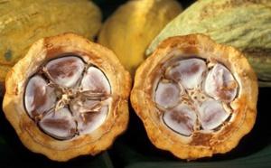 La COPAL, l'Alliance des Pays producteurs de Cacao