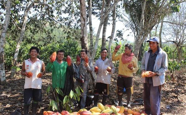 La terre, la forêt, le cacao et vous
