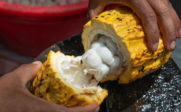 Une démarche durable autour du cacao…