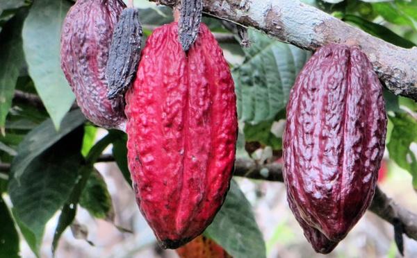 Cacao For Good : le meilleur projet éducatif et social du monde