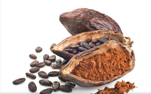 Le rôle de l'intestin est crucial pour l'effet cognitif du flavanol de cacao dans la nutrition sportive, selon une revue