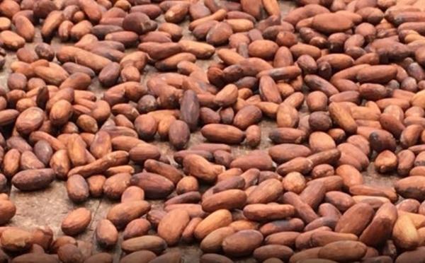Le Ghana et la Côte d'Ivoire, une collaboration plus étroite pour protéger leur industrie du cacao