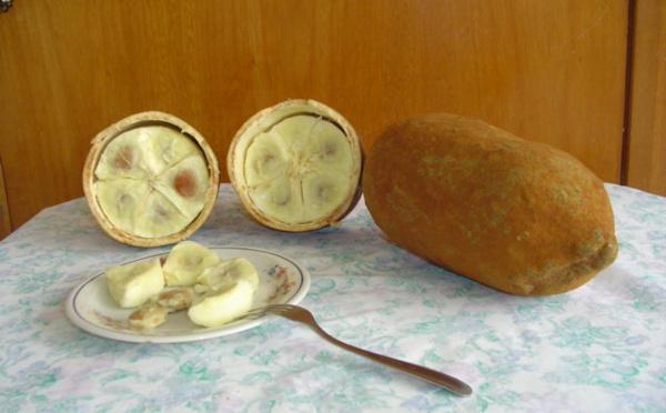 L'arbre Cupuaçu de la famille des Cacaoyers