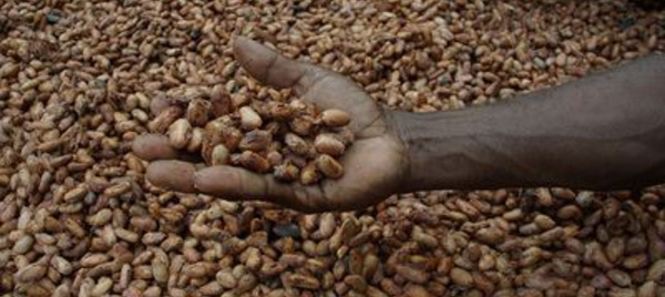 La provenance des fèves de cacao du Togo en Afrique