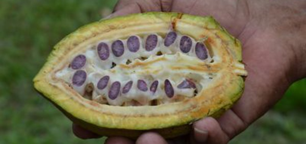 Cacao d'Excellence, édition 2015