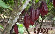 Cadbury s'engage pour le futur du cacao