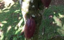 Cacao durable : un objectif clair et ambitieux.