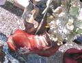 Moulage chaussure en chocolat