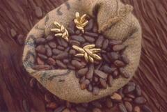 Boucles d'oreilles en or fin fèves de cacao n4