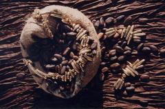 Collier fèves de cacao n2